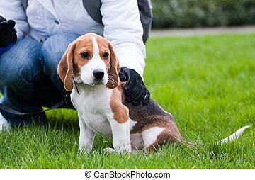 hund, und, menschliche , auf, grünes gras