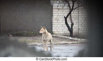 hund, unter, der, regen
