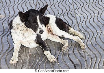 hund, wohnungslose, traurige