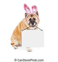 hund, zeichen,  akita, Tragen, leer, Ostern, kaninchen