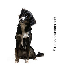 hund, -, zuhören