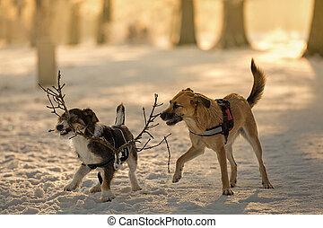 Hunde beim spielen im Schnee - Zwei Mischlingshunde spielen...