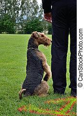 Hunde sitzt - Dog sitting