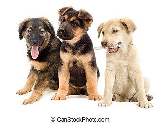 hundebabys, Aussehen