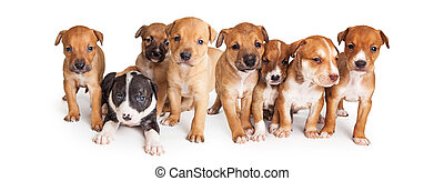 hundebabys, decke, bild