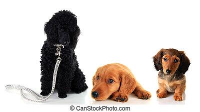 hundebabys, drei