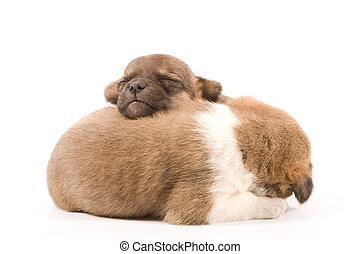 hundebabys, eingeschlafen
