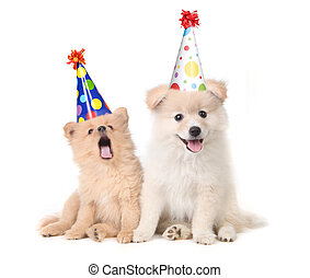 hundebabys, feiern, a, geburstag, per, singende