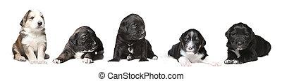hundebabys, gruppe