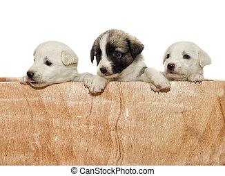 hundebabys, guckend