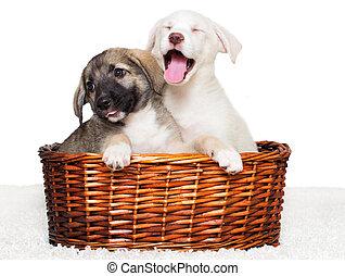 hundebabys, in, a, korb