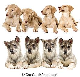 hundebabys, satz, Aussehen