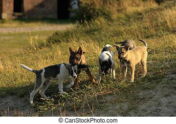 hundebabys, spielende