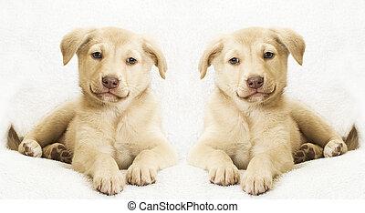 hundebabys, zwei