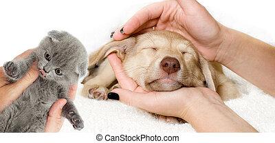 hundehvalp, og, killingen, ind, den, hænder