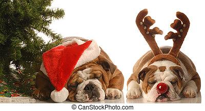 hunden, angekleidet, als, santa, und, rudolph