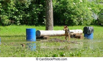 hunden, ar, spielende , fangen-auf, in, a, puddle.