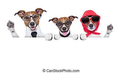 hunden, familie, glücklich