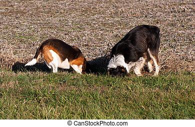 hunden, graben
