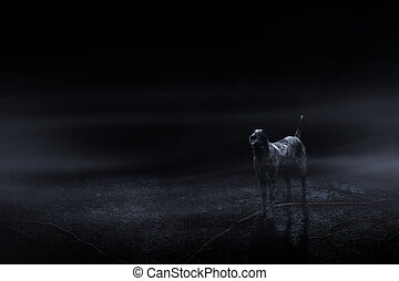 hunden, in, der, friedhof, von, dunkelheit