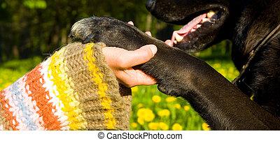 hunden, pfote, und, menschliche hand