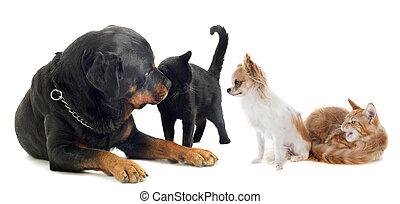 hunden, und, katz