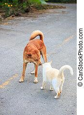 hunden, und, katzen