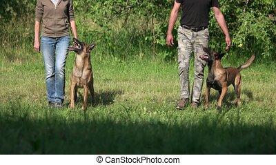 hunden, und, menschen, ar, synchronously, stepping.