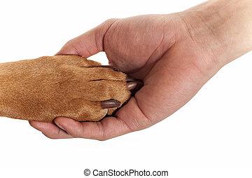 hundepfote, in, menschliche hand