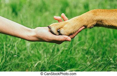 hundepfote, und, hand, hã¤ndedruck