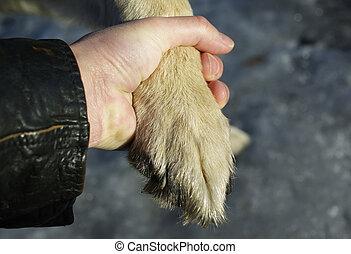 hundepfote, und, mann, hand