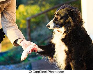 hundepfote, und, menschliche hand, machen, a, hã¤ndedruck, draußen