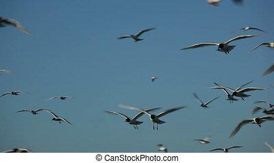 hunderte, von, vögel fliegend, in, der, blauer himmel, 8