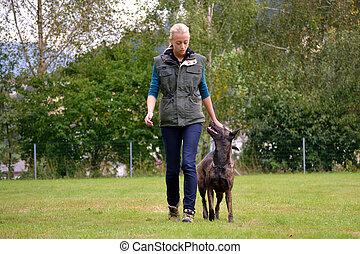 Hundetrainerin mit aufmerksamen Hund - Junge Frau trainiert...
