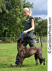 Hundetrainerin mit ihrem Hund - Hundeausbildnerin trainiert ...