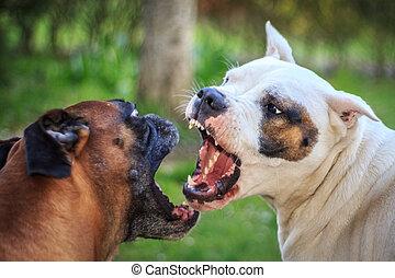 hundkapplöpning, stridande