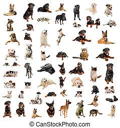 hundkapplöpning, valpar, och, katter