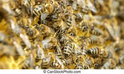 Hundreds of bees creep on the beecomb hexagons with golden...