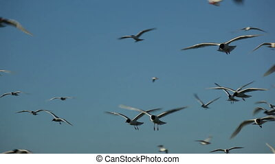 hundreds of birds flying in the blue sky 8 - hundreds of...
