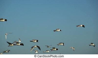 hundreds of birds flying in the blue sky 3