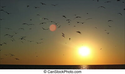 hundreds of birds on a background beautiful sunset 1