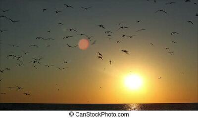hundreds of birds on a background beautiful sunset 1