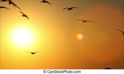 hundreds of birds on a background beautiful sunset 3