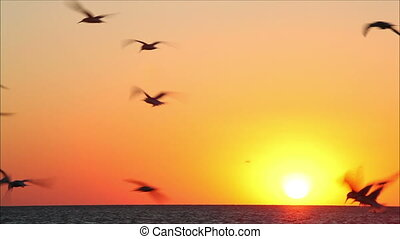 hundreds of birds on a background beautiful sunset 7