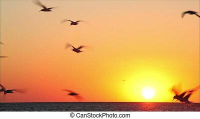hundreds of birds on a background beautiful sunset 7