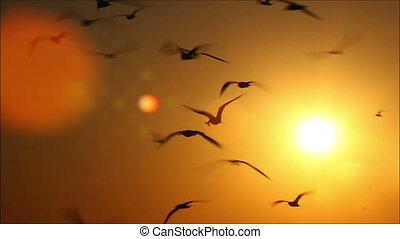 hundreds of birds on a background beautiful sunset 4