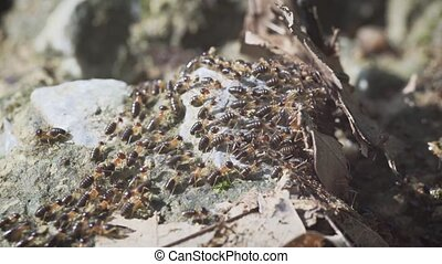 Hundreds of Subterranean Termites on the March. - Hundreds...