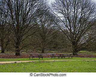 Hungarian oak trees in a Yorkshire park, England, with wooden picnic tables
