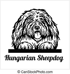 Hungarian Sheepdog - Peeking Dogs - breed face head isolated...
