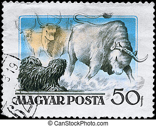 """HUNGARY - CIRCA 1956: A Stamp printed in HUNGARY shows image of a Puli and Steer from the series """"Hungarian Dogs"""", circa 1956"""